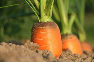 fruits et légumes les plus faciles à cultiver