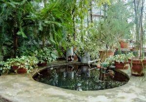 développement des bactéries dans un bassin de jardin